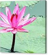 Water Lily Canvas Print