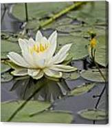 Water Lily Pictures 45 Canvas Print