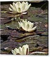Water Lily Pictures 64 Canvas Print