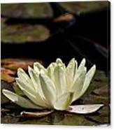 Water Lily Pictures 67 Canvas Print