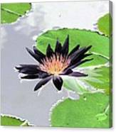Water Lily - Purple Power - Photopower 1376 Canvas Print