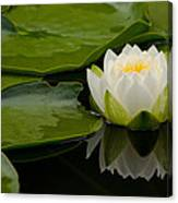 Water Lily Reflection II Canvas Print