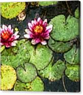 Water Lily Water Color Canvas Print