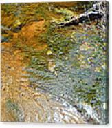 Water Plants 2 Canvas Print