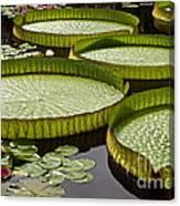 Water Platter Charm Canvas Print