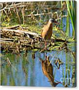 Water Rail Reflection Canvas Print