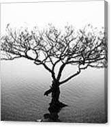 Water Tree Canvas Print