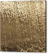 Water Wall Gold Canvas Print