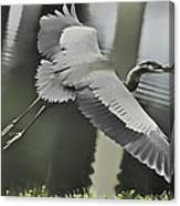 Waterbird Flying Canvas Print