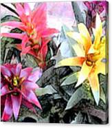Watercolor And Ink Sketch Of Colorful Bromeliads Canvas Print