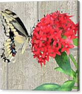 Watercolor Butterfly Two Canvas Print