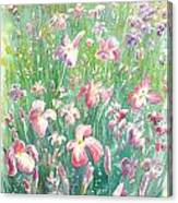 Watercolour Of Pink Iris's In A Green Field Canvas Print