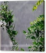 Watered By Nature Canvas Print
