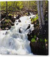Waterfall By The Aspens Canvas Print