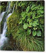 Waterfall Egmont Np New Zealand Canvas Print