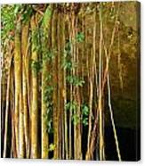 Waterfall Of Jungle Tree Roots Canvas Print
