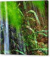Waterfall Over Ferns Canvas Print