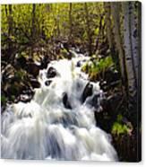 Waterfall Through The Aspens Canvas Print
