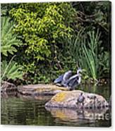 Waterfowl Pond Canvas Print