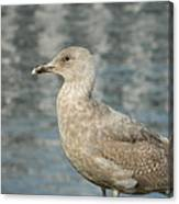 Waterfront Seagull  Canvas Print