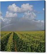 Watering The Corn Canvas Print