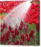 Watering The Garden Canvas Print