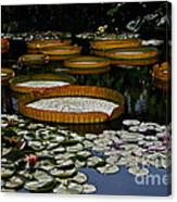 Waterlilies All Canvas Print