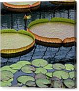 Waterlilies And Platters 2 Canvas Print