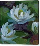 Waterlilies At Martha Lake 2 Canvas Print