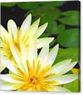 Waterlilies In Pond Canvas Print