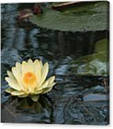 Waterlilly 1 Canvas Print
