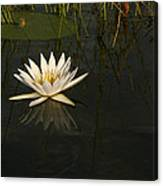Waterlilly 5 Canvas Print