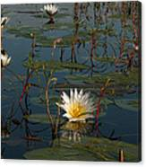 Waterlilly 8 Canvas Print