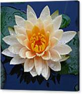Waterlily After A Shower Canvas Print