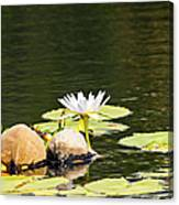 Waterlily And Coconuts Canvas Print