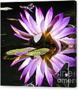 Waterlily And Dragonfly Canvas Print