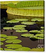 Waterlily Charm Canvas Print