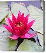 Waterlily In A Pond Canvas Print