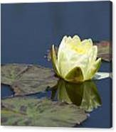 Waterlily One Canvas Print