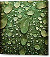 Raindrops On Watermelon Rind Canvas Print