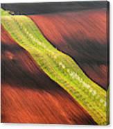Waterslide Canvas Print