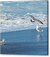 Waves In The Pacific Ocean, Point Reyes Canvas Print