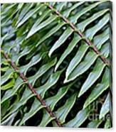 Waves Of Green Canvas Print