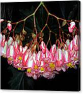 Wax Begonia Canvas Print