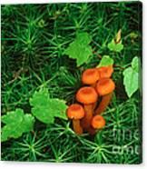 Wax Cap Fungi Canvas Print