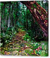 Way To The Lake Canvas Print