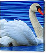 Wayward Swan 2 Canvas Print