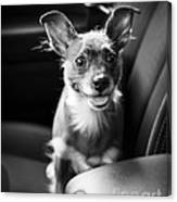 We Goin For A Ride Canvas Print
