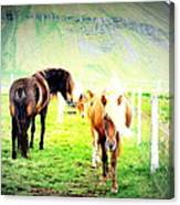 We Live Right Here Inside This Fence And Under This Big Mountain  Canvas Print