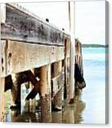 Weathered But Strong Canvas Print